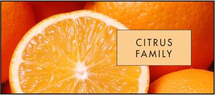 Citrus family mang dòng hương thơm tinh tế và mãnh liệt